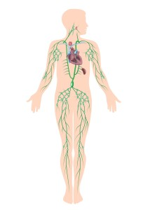 lymphatic system effects tattoo removal clearance times
